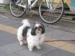 オーナー愛犬